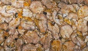 petrified wood yellow2